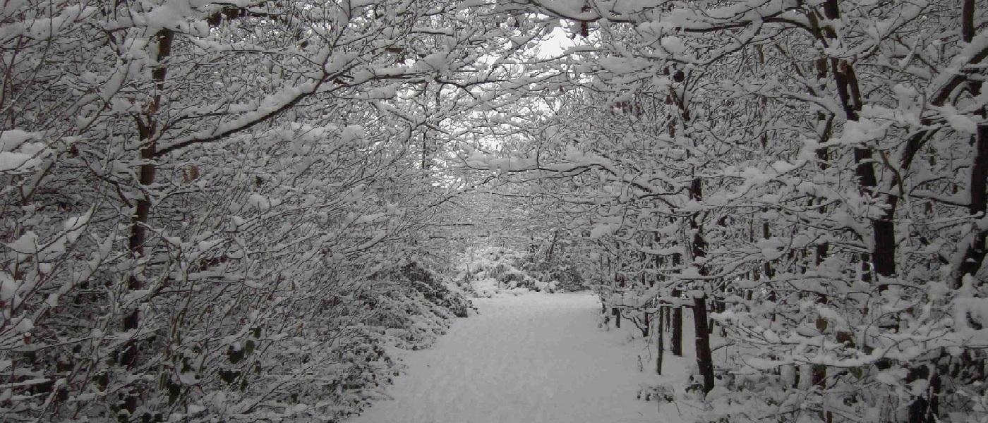 Woodland Walk in Winter