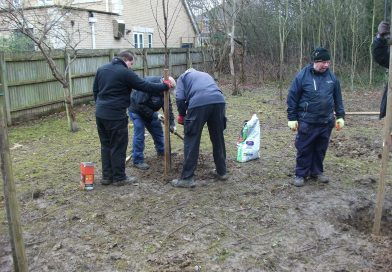 Plum Orchard planted