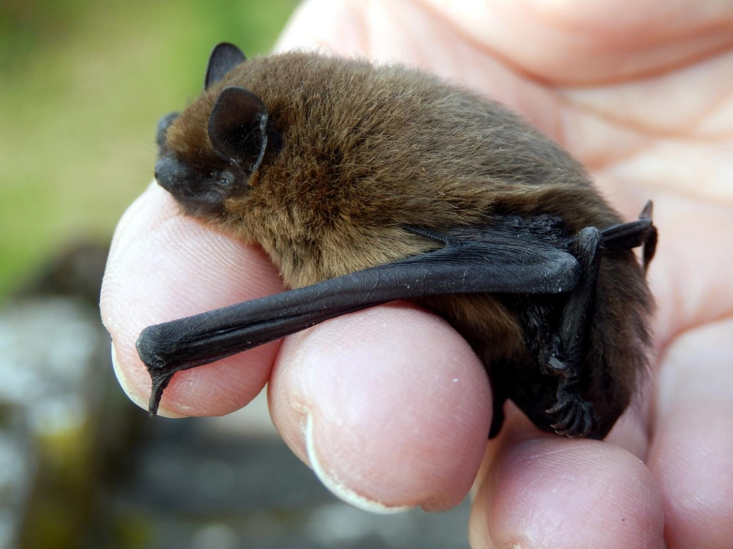 Bat Night - September @ Highfield Park Visitor Centre