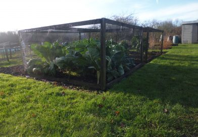 Allotments Available Now