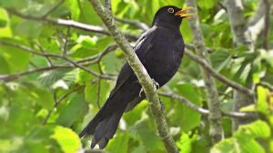 CANCELLED Get to know the park's birds (by their calls and songs) @ Highfield Park Visitor Centre