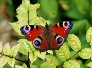 Get to know the park's butterflies @ Highfield Park Visitor Centre
