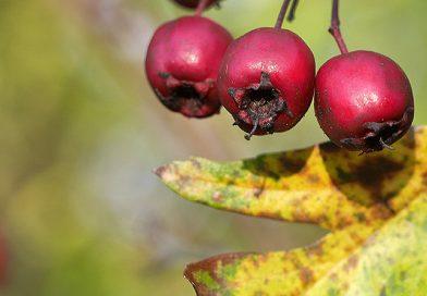 'Autumn colours': Part one