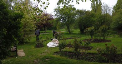 Tidying up the Rose Garden