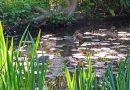 Dappled lilies